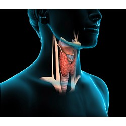 Your Thyroid, What & Why?